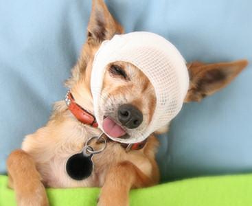 Fido Worth Pet Insurance